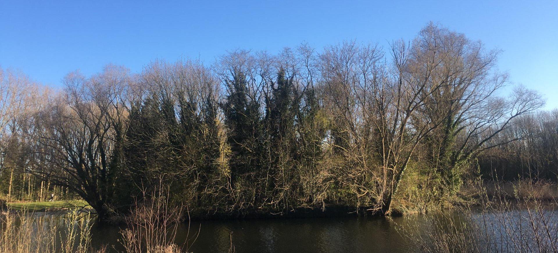 An Island with Herons nesting, Belgium